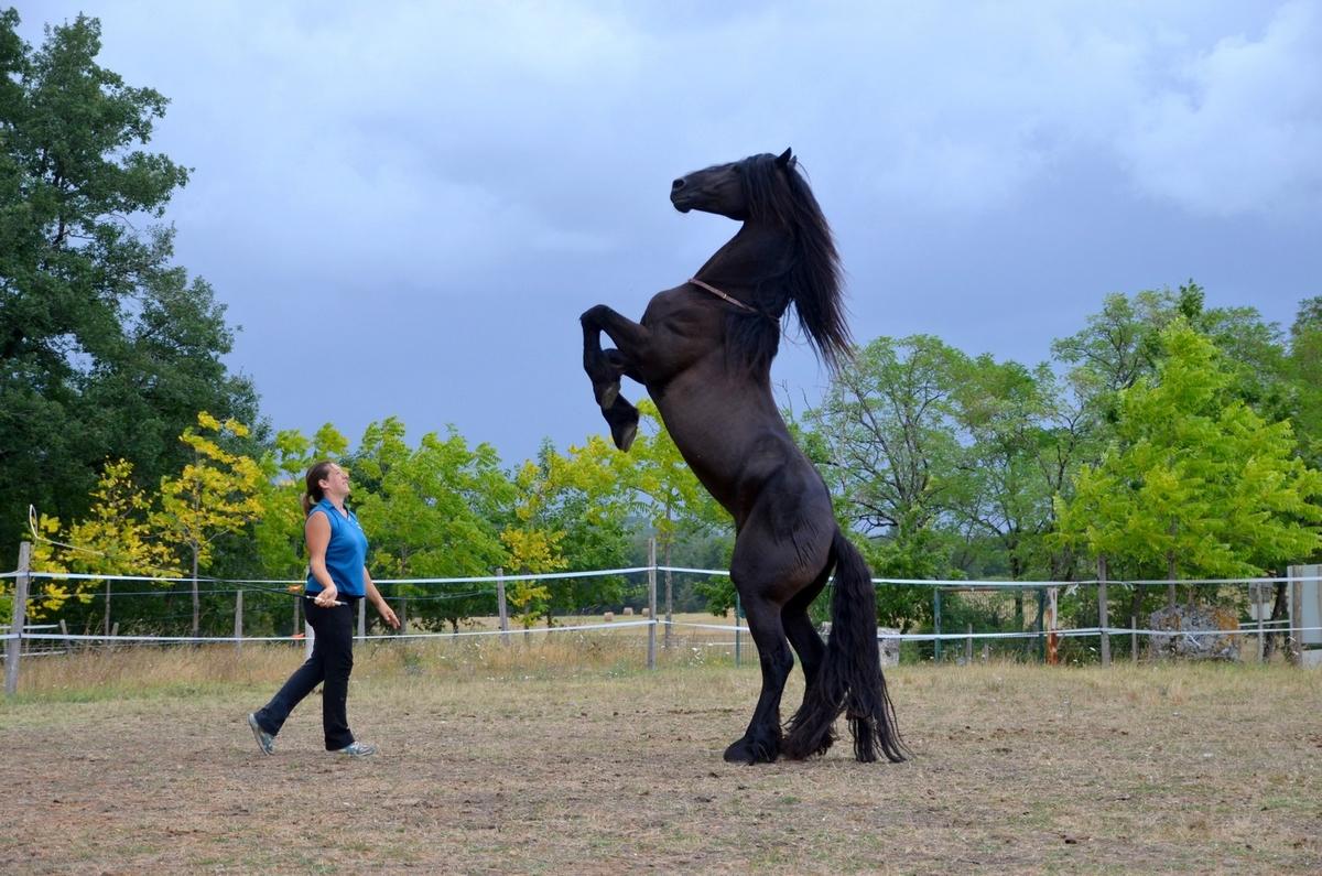 cordeo cordelette cuir cheval liberté