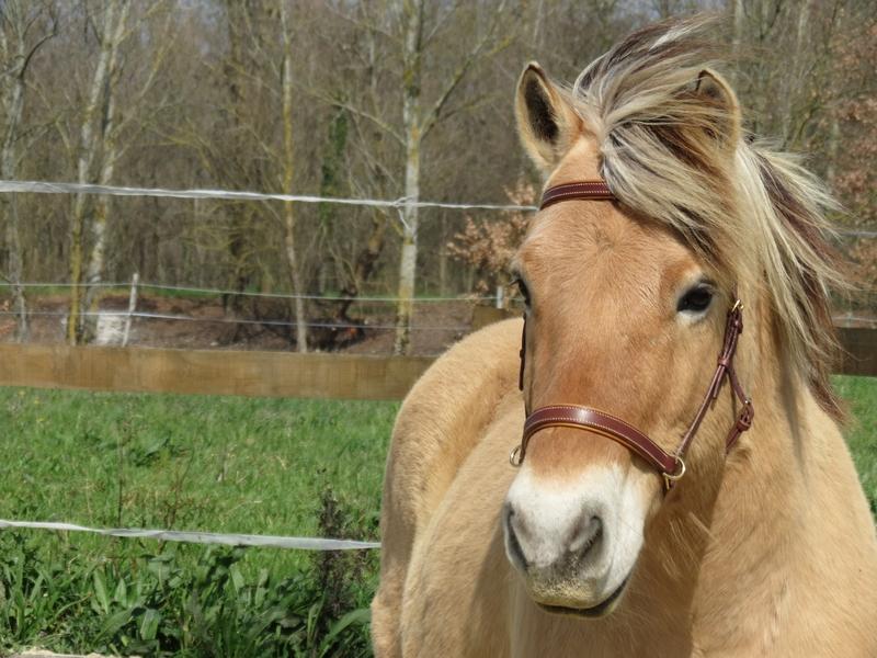 side pull cheval filet sans mors